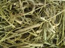 Timothy Hay (Best Quality Hay From Western America) 2Kg
